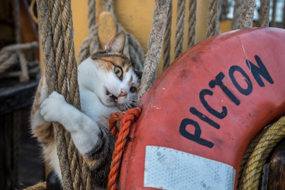 cat on board tall ship
