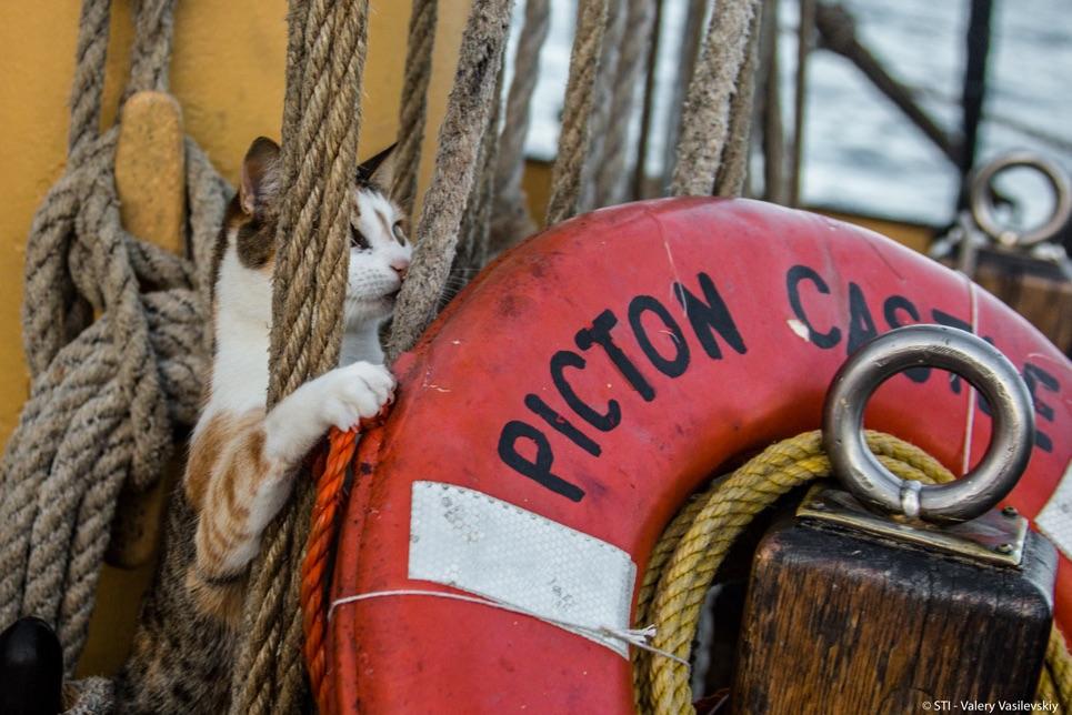 Feline friend on board tall ship.